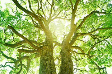 新緑,木,エコロジー