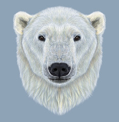 Illustrated Portrait of Polar Bear