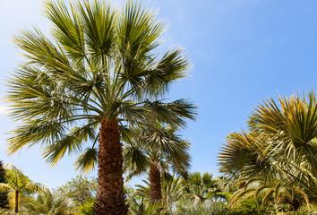 palm garden under a blue sky