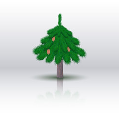 Spruce tree isolated on white background. Vector illustration.