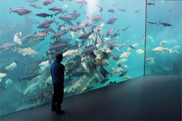 man moderator standing by a huge glass aquarium full of fish