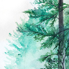 Winter wood forest pine landscape