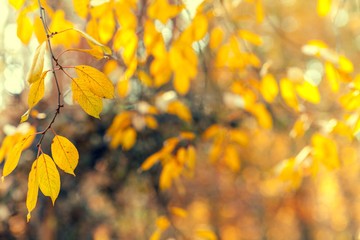 Natural autumn leaves blur background
