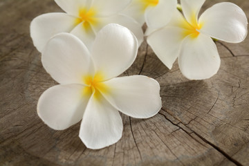 Plumeria flower on old wood floor.