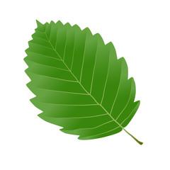 Wall Mural - alder leaf