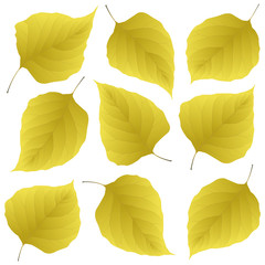 Wall Mural - yellow leaves of lilac