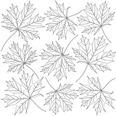 Wall Mural - contoured maple leaves