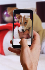 Male hand taking photo of boy and his dog on new year with cell, mobile phone.