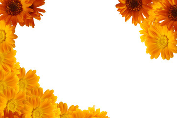 Frame of yellow flowers on a white background