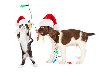 Cute Kitten and Puppy Playing With Christmas Lights