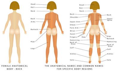 Female body - Back