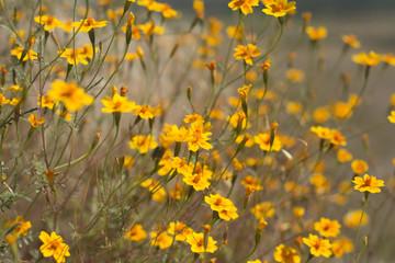Serie Flores en la Quemada