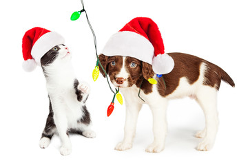Playful Christmas Kitten and Puppy