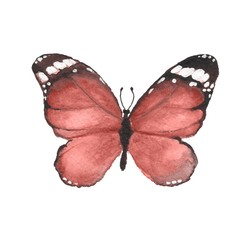 Butterfly. Watercolor illustration 2