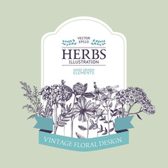 Vector design with hand drawn herbs. Decorative background with vintage medicinal herbs sketch