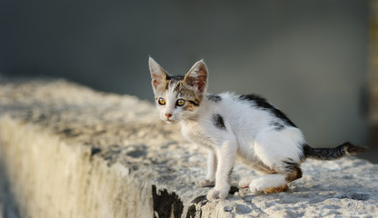 cute stray kitten/small, lonely, cute, homeless kitten
