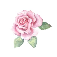 Beautiful bud. Watercolor rose