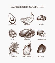 Vintage collection of vintage inking exotic fruits sketch. Tropical plants illustration set