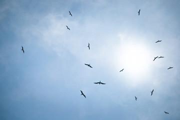 Birds in the sky hunt for fish