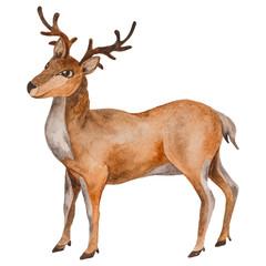 Watercolor Reindeer