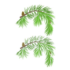 Branch of Christmas tree with pine cone with snow vector