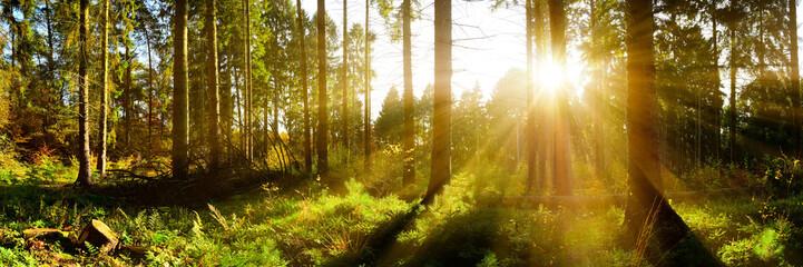 Aluminium Prints Autumn Wald Panorama mit Sonnenstrahlen