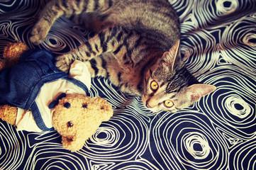 Little tabby kitten on the carpet