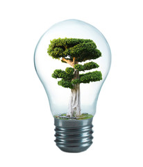 Green eco energy concept. Tree growing inside light bulb, isolated on white