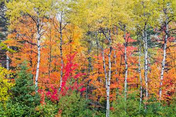 Autumn North Wood
