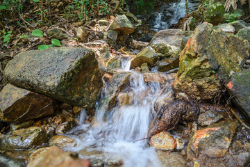 Stream in forest, Nature rill flow