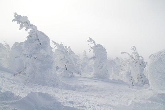 """""""Snow monster"""" in Zao, Japan."""
