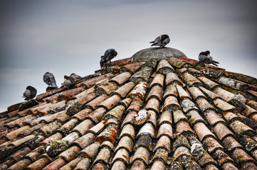 pigeons on an old roof in San Leo