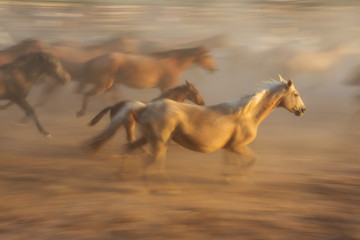 Horse baby and his mother in a fiery blurred motion. Flock is blurred in the background.