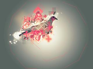 Abstract pigeon illustration