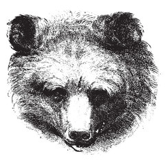 Bear, vintage engraving.