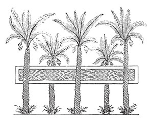 Egyptian garden with a pond, vintage engraving.