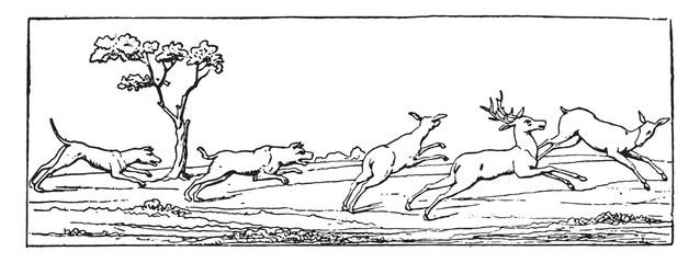 Deer hunting, vintage engraving.