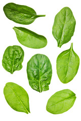 spinach leaf isolated