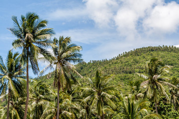 Palm trees on blue cloudy sky and mountain background.
