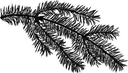 small black fir branch isolated illustration