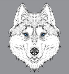 Hand draw husky portrait. Hand draw vector illustration