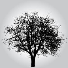 Tree 3312
