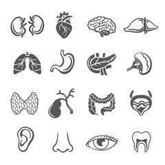 Human Organs Set