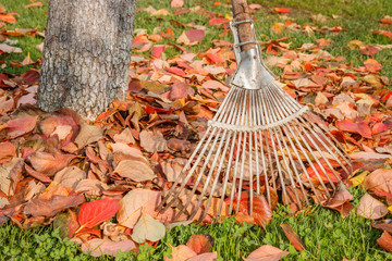 Leaf rake and leaves stack