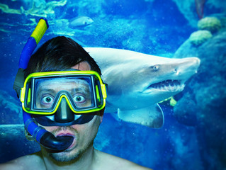 Photo sur Plexiglas Plongée Im Haifischbecken - Diving with a shark