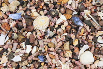 Different shells on a beach