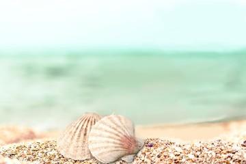 Seashell.