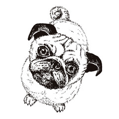 Pug dog, vector hand drawn sketch with cute domestic animal