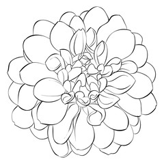 beautiful monochrome black and white dahlia flower isolated on background. Hand-drawn contour lines.