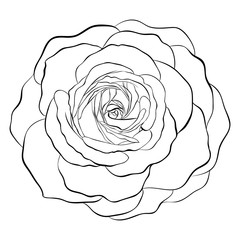Beautiful monochrome black and white rose isolated on white background.